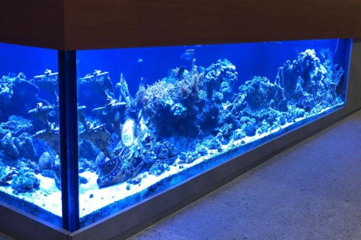 Pousada Casa de Maria - aquário